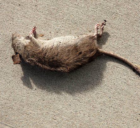 11k bill for the dead rat bakery